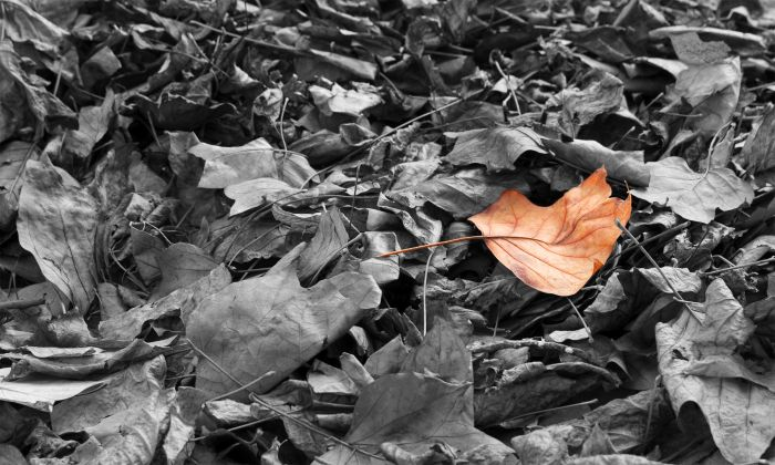 photoblog image Autumn leaves